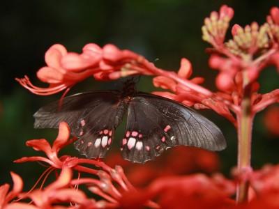 emmen-7372-vlinder