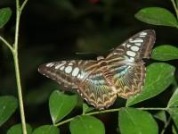 emmen-7374-vlinder