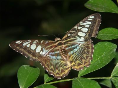 emmen-7375-vlinder