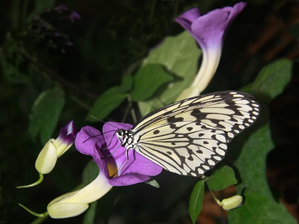 Vlinder in Dierenpark Emmen