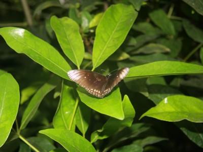 emmen-7380-vlinder